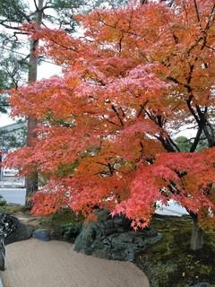 鳥取大山あたりの紅葉は見頃、温泉と水木しげるロードで山陰を満喫!_191123_0004.jpg