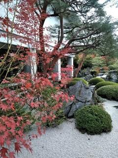 鳥取大山あたりの紅葉は見頃、温泉と水木しげるロードで山陰を満喫!_191123_0005.jpg